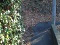 路地裏の先の小道